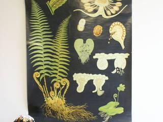 De Varen: Retro schoolkaart. Originele vintage schoolplaat/plantenkunde. :  Muren & vloeren door Flat sheep