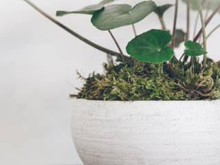 植物とのコラボ作品 my works with plants: 陶刻家 由上恒美                                          Ceramic Sculptor  tsunemi yukami  が手掛けた現代のです。,モダン