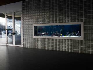 ADn Saltwater aquarium at a private school Casas modernas por ADn Aquarium Design Moderno