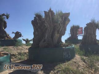 El Ventorro 1920: Jardín de estilo  de Venta de olivos El Ventorro 1920