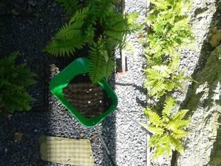 Plantación de los helechos: Jardines de estilo  de LASUMA paisajistak