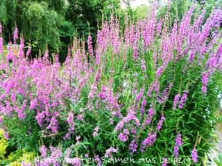 Garden by Naturgarten-Samen aus Leipzig,