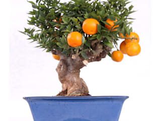 Interior landscaping by Bonsai-Shopping,