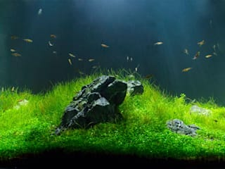 Feng Shui 和風の 寝室 の Aquarium Architecture 和風