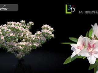 by La Troisième Dimension