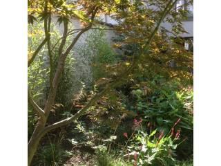 Urban Garden Designer Garden Plants & flowers