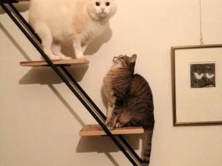 キャットウォークと階段: tripinteriorが手掛けたです。
