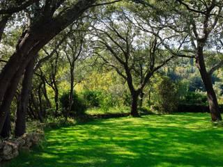 Vườn phong cách tối giản bởi CONCEPTUELLES PAYSAGE ET DECORATION Tối giản
