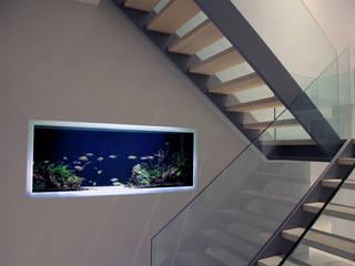 Vitro House ミニマルスタイルの 玄関&廊下&階段 の Aquarium Architecture ミニマル
