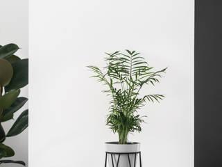 Salones minimalistas de Joanna Kubieniec Minimalista