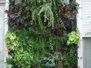 Murs végétaux naturels:  de style  par Urban Flore