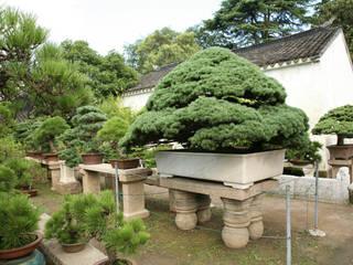 Gestaltung eines Bonsai Gartens Moderner Garten von Bonsai.co.at Modern