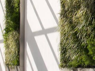 Vườn phong cách hiện đại bởi creare paisagismo Hiện đại