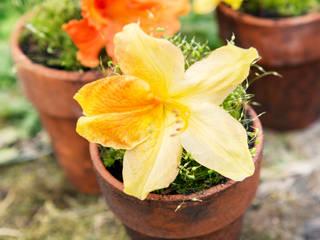 Pflanzenfreude.de 庭院