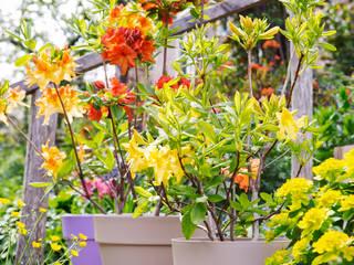 Pflanzenfreude.de Modern style gardens