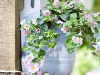 Pflanzenfreude.de Minimalist style garden