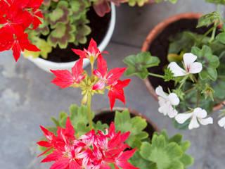 Pflanzenfreude.de Terrace