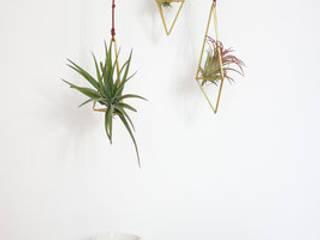 SOLO HIMMELI & TILLANDSIA:  de style  par Lilas Wood