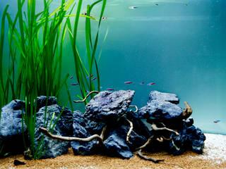 von ADn Aquarium Design Tropisch