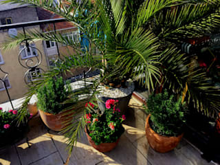 Tropical style balcony, veranda & terrace by AYTÜL TEMİZ LANDSCAPE DESIGN Tropical