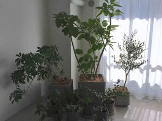 Jardines de estilo moderno de Shikinowa Design Moderno