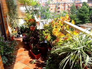 Balcones y terrazas de estilo moderno de Filippo Fiori Architetto Moderno