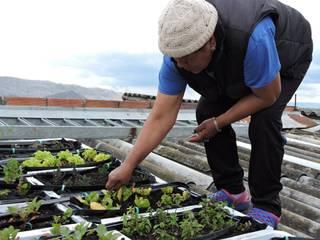 Jardines clásicos de Techos Verdes Productivos Clásico