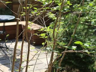藤沢市 M邸: 植徳が手掛けた庭です。