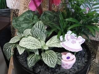 Misto de plantas que consomem pouca água:   por Maravilhas do Berço Lda