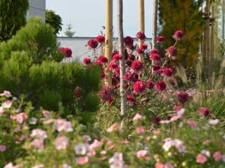 Ogród noczesny o preriowym charakterze od Green Decor