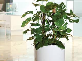 Photos, la planta trepadora de Hobby Flower Moderno