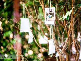 Árvore de Fotos:   por Cena De.Coração