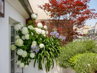 Rambuteau Terrasses des Oliviers - Paysagiste Paris Balcon, Veranda & Terrasse modernes