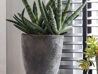 planten als decoratie:  Woonkamer door choc studio interieur