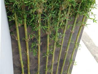 Modern Garden by GF ARQUITECTOS Modern Bamboo Green