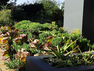 Forest View Garden:  Garden by Simon Clements: Garden & Landscape Design