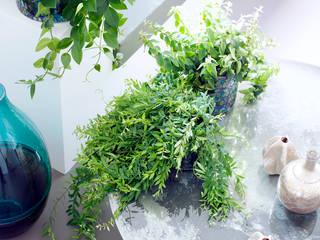 Pflanzenfreude.de 室內景觀 Green