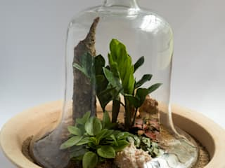 Terrariums:   by Your Green Canvas