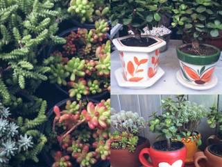 Variedades de plantas suculentas, en macetas de barro y ceramica: Terrazas de estilo  por Conexion Interior, Arquitectura y Diseño