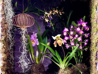Pflanzenfreude.de 室內景觀 Purple/Violet