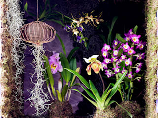 Pflanzenfreude.de Interior landscaping Purple/Violet