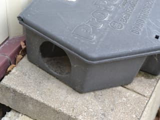 Setting rat traps:   by Pest Control Pretoria