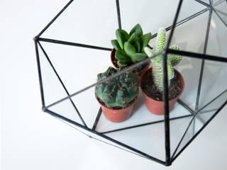 Terrario Icosaedro:  de estilo  de ZetaGlass