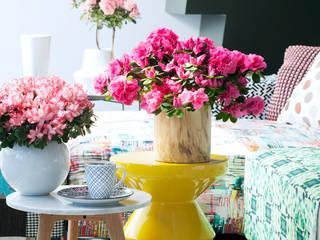 Pflanzenfreude.de Living room