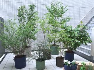 大田区のテラスガーデン: Shikinowa Designが手掛けた庭です。