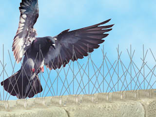 Bird proofing:   by Cape Town Pest Control