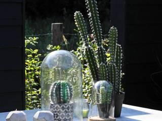 Moderne tuin in het groen Moderne tuinen van Stoop Tuinen Modern
