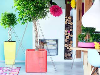 Pflanzenfreude.de Interior landscaping Multicolored