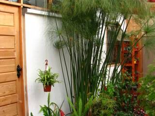 Vortice Design Ltdaが手掛けた庭