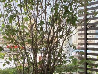 Balcones y terrazas de estilo tropical de Marianna Vetorazzo Haddad Arq+Interiores Tropical